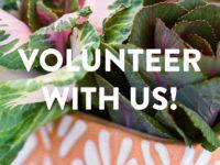 volunteerwithus