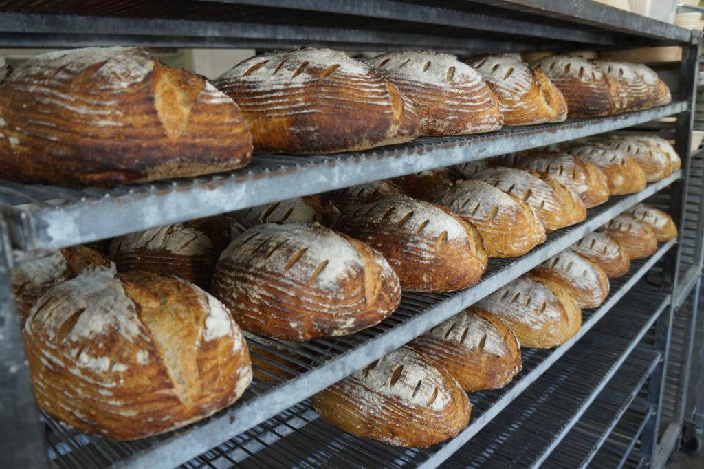 Loaves of sourdough